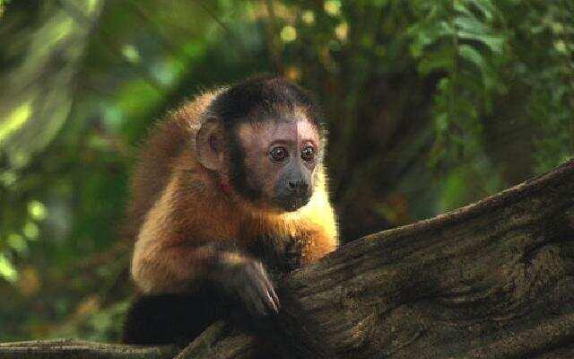 亚马逊萌猴奇遇记