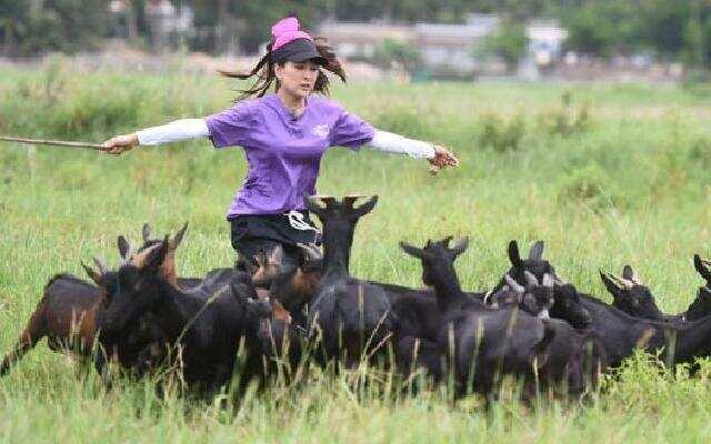 《十二道锋味》小小山羊也能吓倒马苏