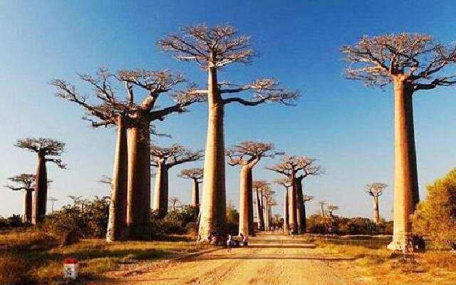 马达加斯加之旅