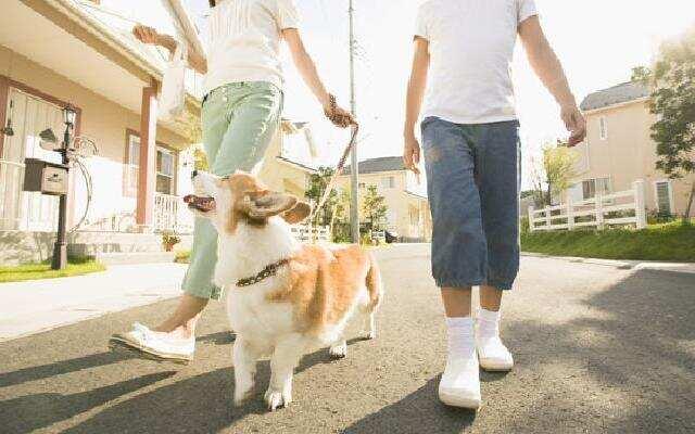 1818在路上:没证要扣犬?姑娘怒了:小题大做!