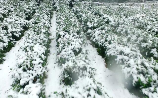 杭州雪景航拍 美出新高度!