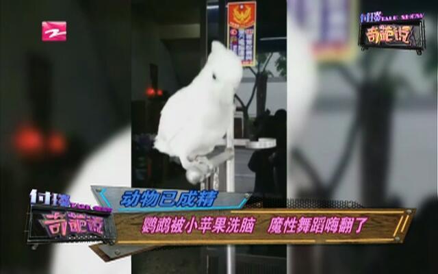 动物已成精:鹦鹉被小苹果洗脑  魔性舞蹈嗨翻了