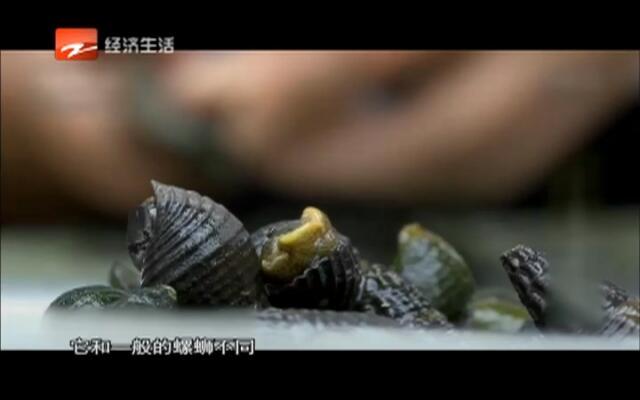 20160228《48小时》:钱江之源  小城开化