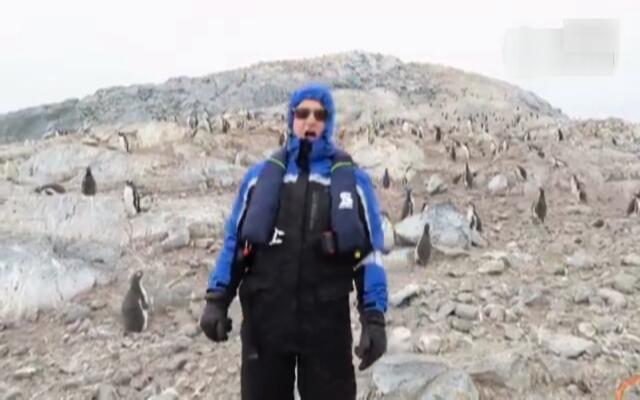 企鹅们听到这个人唱歌都吓跑了