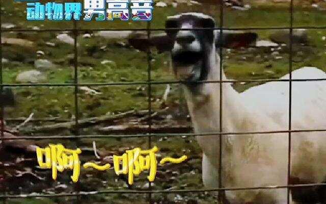 第四季《奔跑吧兄弟》抢先片段:动物界高音演绎《这就是爱》