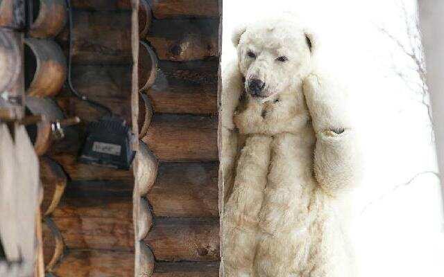 第三季《十二道锋味》谢霆锋变装北极熊 芬兰体验迷之尴尬