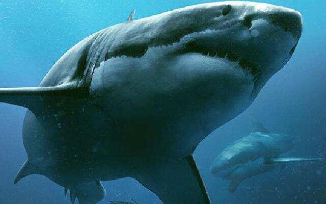 蓝朋友报到:《鲨海》沉浸式体验超刺激  长腿姐妹身陷群鲨绝地逃生