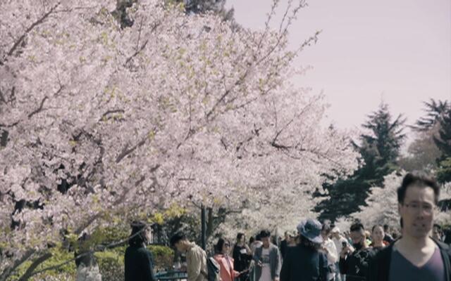 【更青岛】赏心悦事游园日