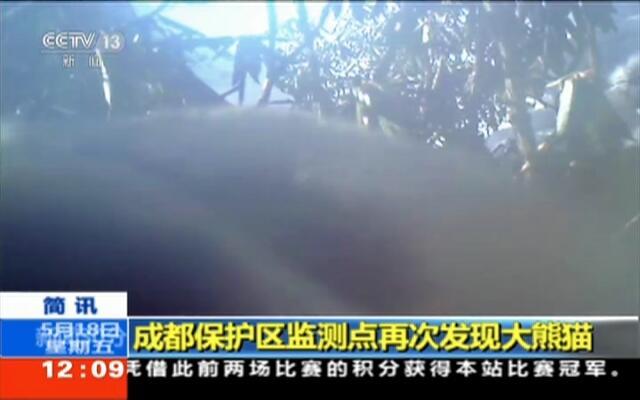 成都保护区监测点再次发现大熊猫