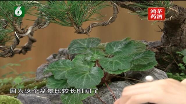 20180915《午夜说亮话》:匠心中国——青山绿水  尽在方寸之间