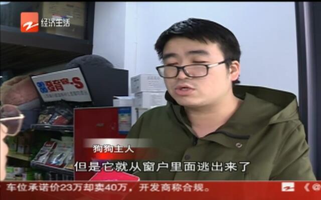 杭州四天办理1.1万件养犬证  狗狗主人心态在改变
