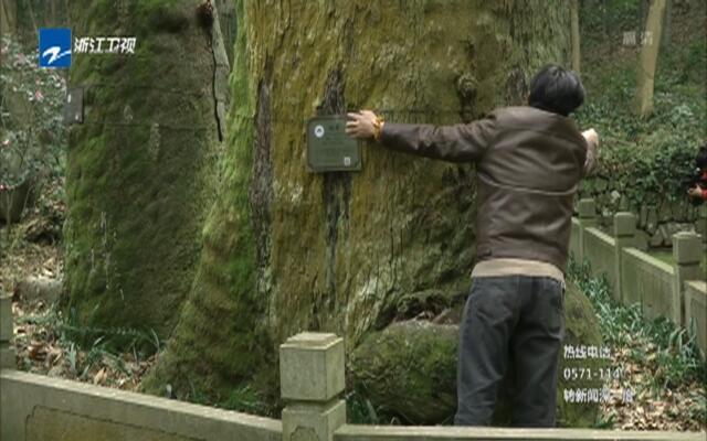 """杭州:只需扫一扫  古树的""""前世今生""""皆知晓"""
