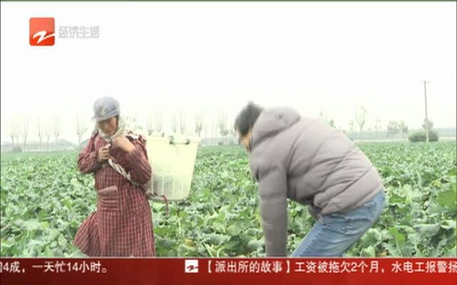 一人一天包8000盒青菜  临近春节蔬菜企业供应增4成