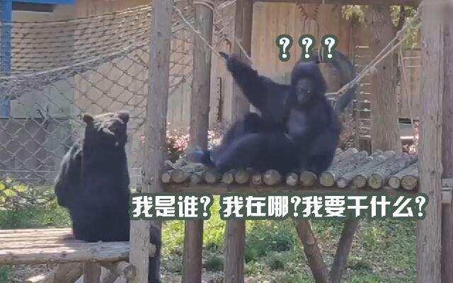 """你好头条君 第11期:猩猩请假工作人员顶上?   世纪佳缘""""饿聊""""  有一套"""