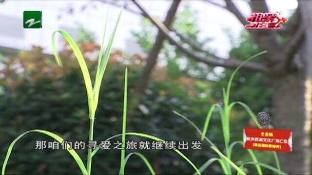"""20190506《相亲才会赢》:必须""""完美"""""""