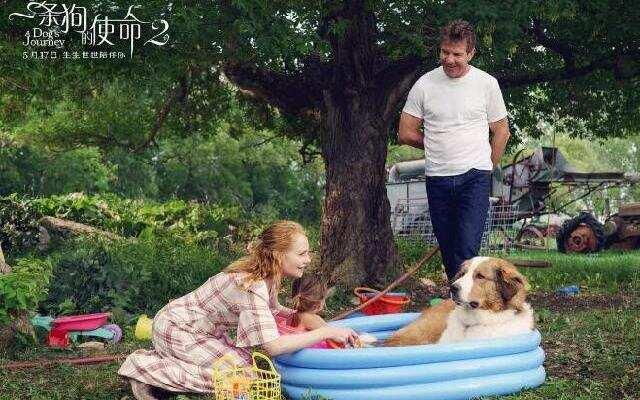 《一条狗的使命2》萌犬贝利回归再演暖心故事