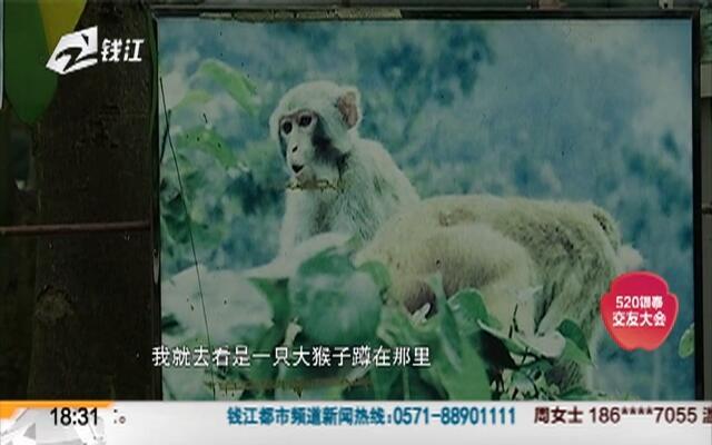 猕猴跑出动物园笼子  闯入小区5人被咬伤