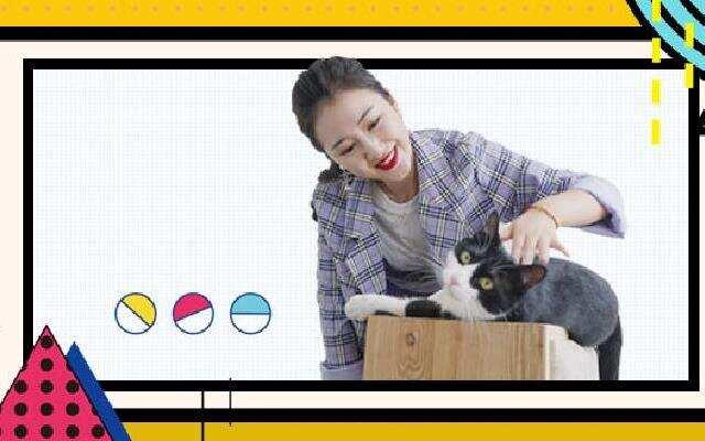 【Gobro】猫咪们的豪华寄养民宿
