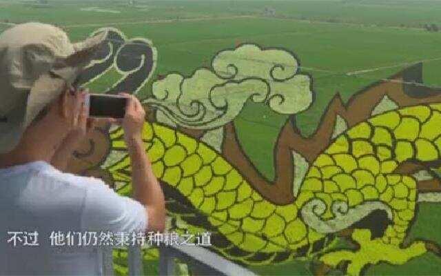 中国村落:万亩稻田变为画布 吸引无数游客观赏