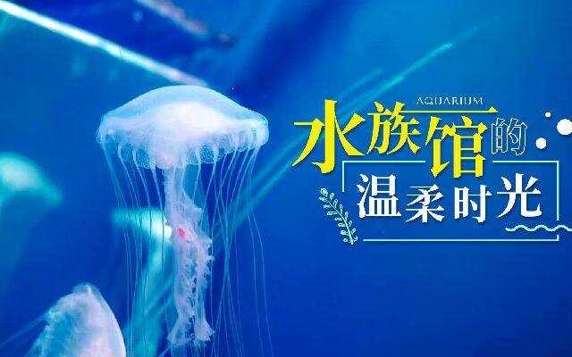 【HI走啦】海参崴4:夏日治愈之旅!打卡俄罗斯最大的水族馆,邂逅海洋小精灵!