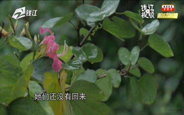 20190727《浙江名医馆》:百草集·金银花