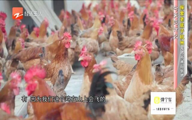 探索老底子杭州  无鸡不欢白斩鸡