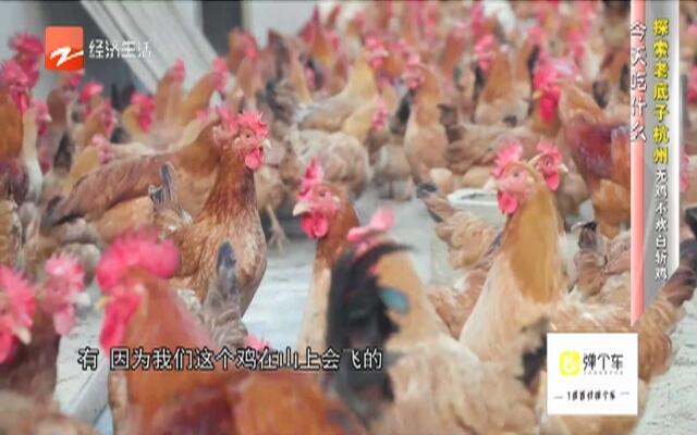 探索老底子杭州无鸡不欢白斩鸡