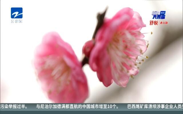 辞旧岁迎新春:各地装扮一新  喜迎新春佳节