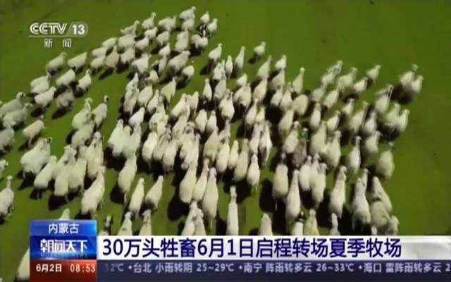 内蒙古:30万头牲畜6月1日启程转场夏季牧场